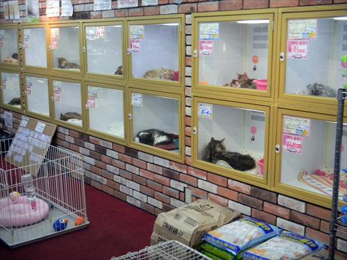 ペットショップワンダー西新井店2店内1